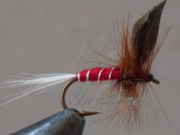 Red Spinner