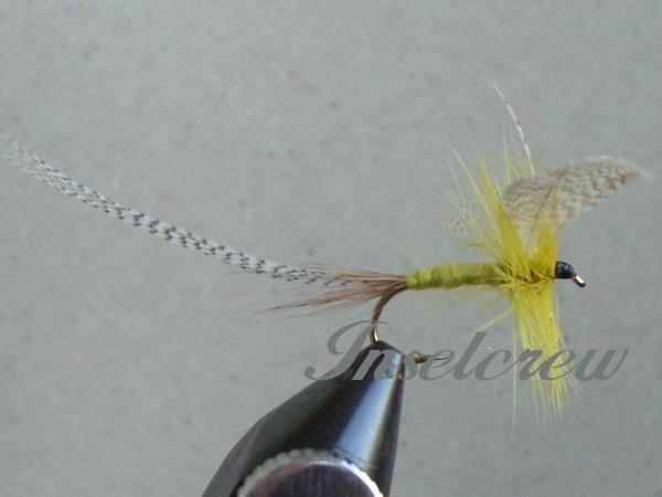 Golden Olive Mayfly Dun