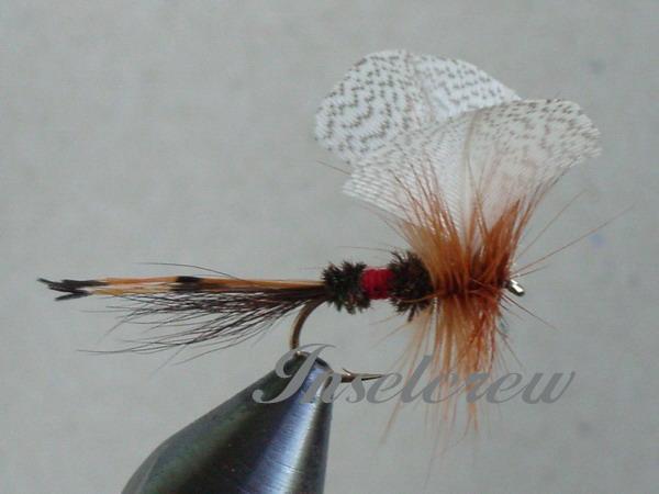 Royal Fan Wing Mayfly