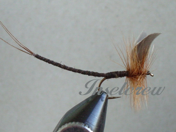 Ginger Quill Extended Body Mayfly