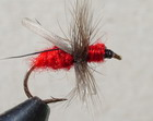 Red Fur Flying Ant