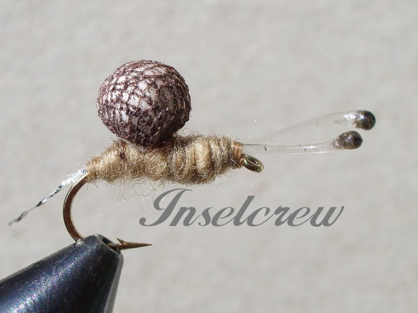 Brown Rainy Snail