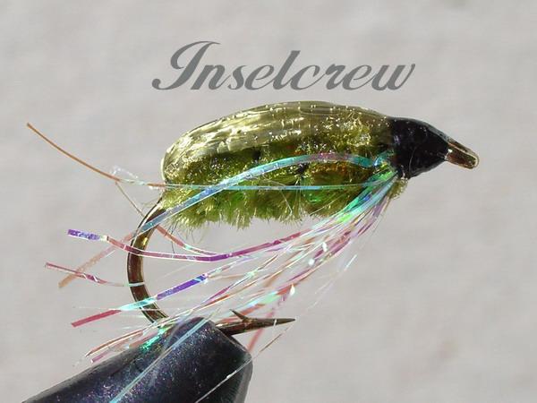 Back Olive Snail