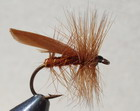 BROWN SEDGE