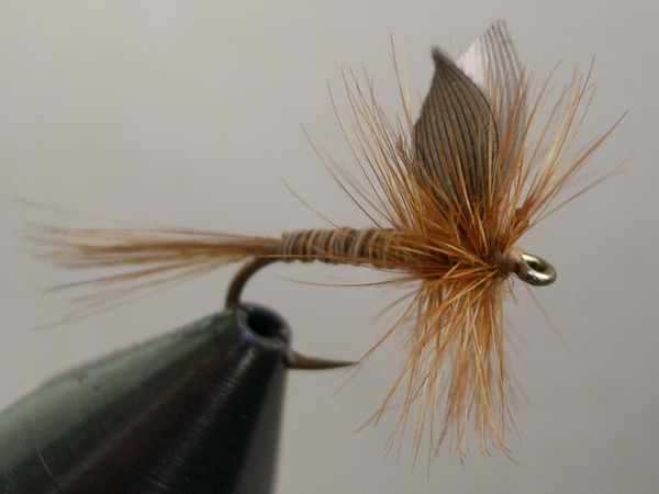 Ginger Quill