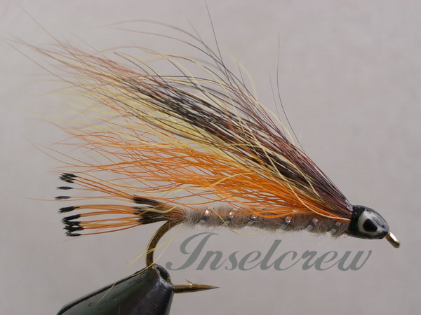 Little Brown Trout