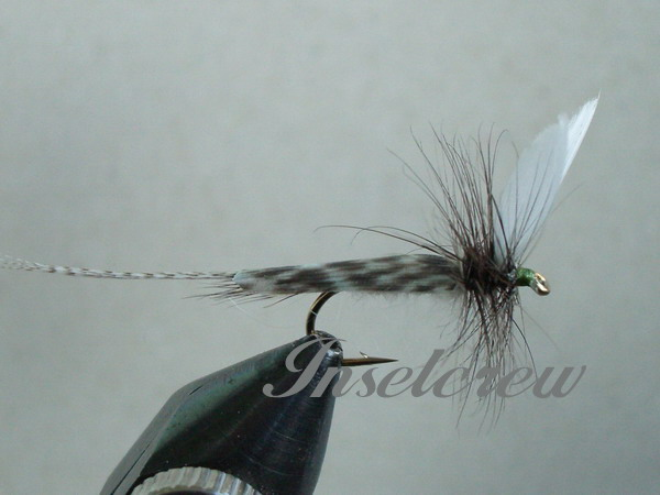 Blue Dun Mayfly